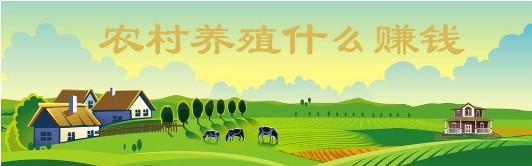 现在什么行业比较赚钱,怎么样在家也能赚钱_2018年农村养殖什么赚钱?_种植什么最赚钱,新致富项目
